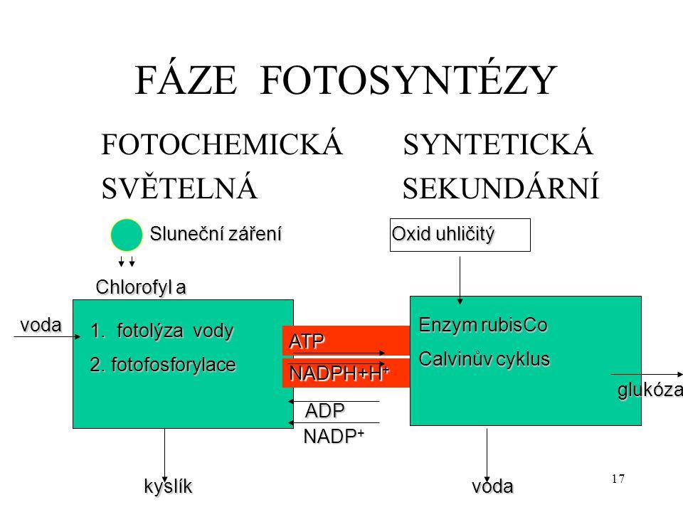 17 FÁZE FOTOSYNTÉZY FOTOCHEMICKÁ SYNTETICKÁ SVĚTELNÁ SEKUNDÁRNÍ Chlorofyl a 1. fotolýza vody 1. fotolýza vody 2. fotofosforylace 2. fotofosforylace vo