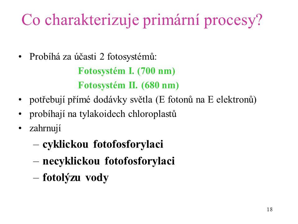 18 Co charakterizuje primární procesy? Probíhá za účasti 2 fotosystémů: Fotosystém I. (700 nm) Fotosystém II. (680 nm) potřebují přímé dodávky světla