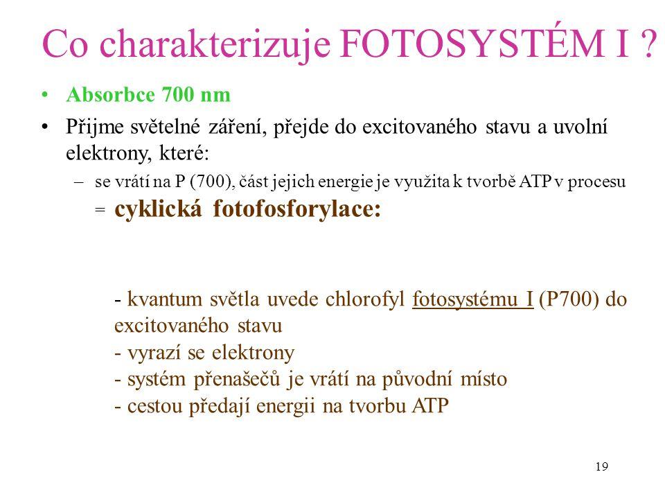 19 Co charakterizuje FOTOSYSTÉM I? Absorbce 700 nm Přijme světelné záření, přejde do excitovaného stavu a uvolní elektrony, které: –se vrátí na P (700