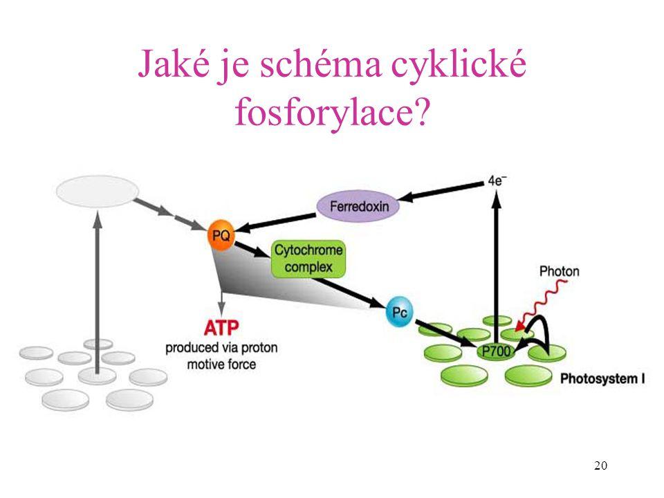 20 Jaké je schéma cyklické fosforylace?