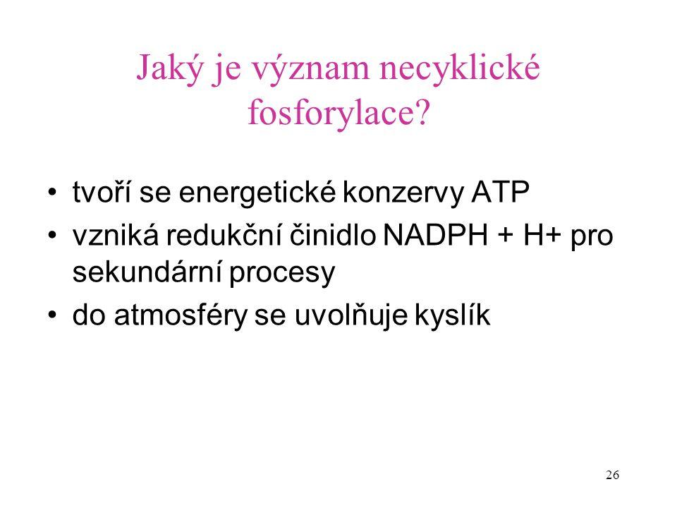 26 Jaký je význam necyklické fosforylace? tvoří se energetické konzervy ATP vzniká redukční činidlo NADPH + H+ pro sekundární procesy do atmosféry se