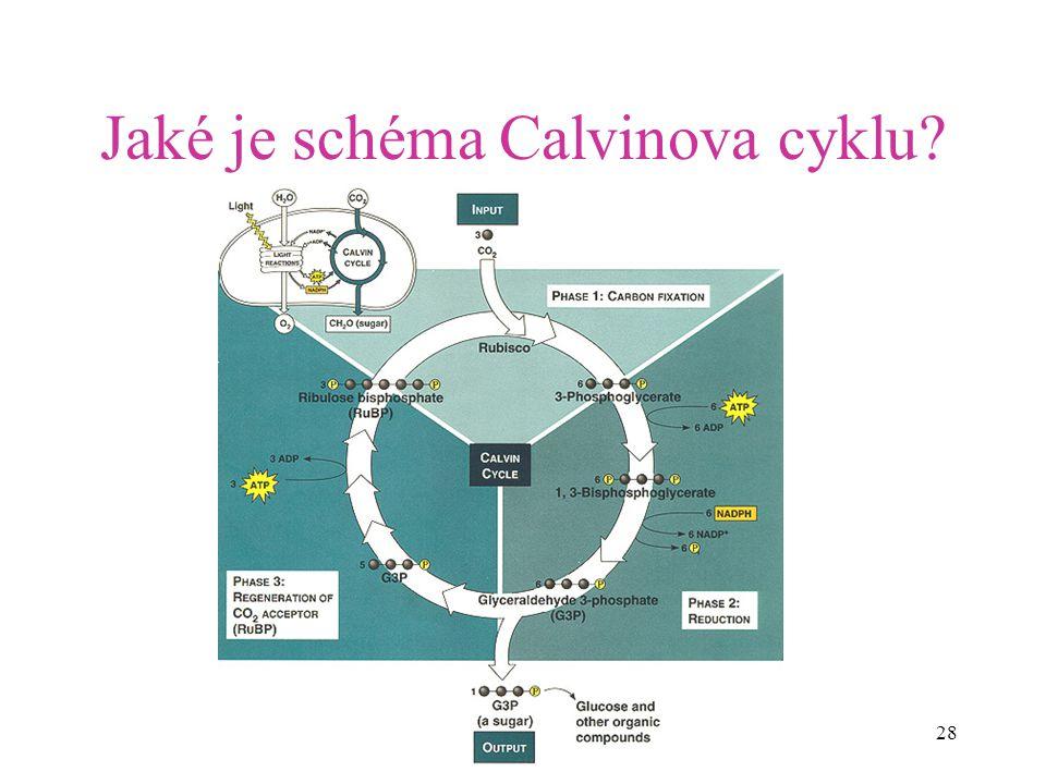 28 Jaké je schéma Calvinova cyklu?