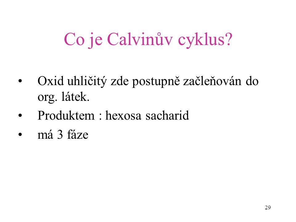 29 Co je Calvinův cyklus? Oxid uhličitý zde postupně začleňován do org. látek. Produktem : hexosa sacharid má 3 fáze