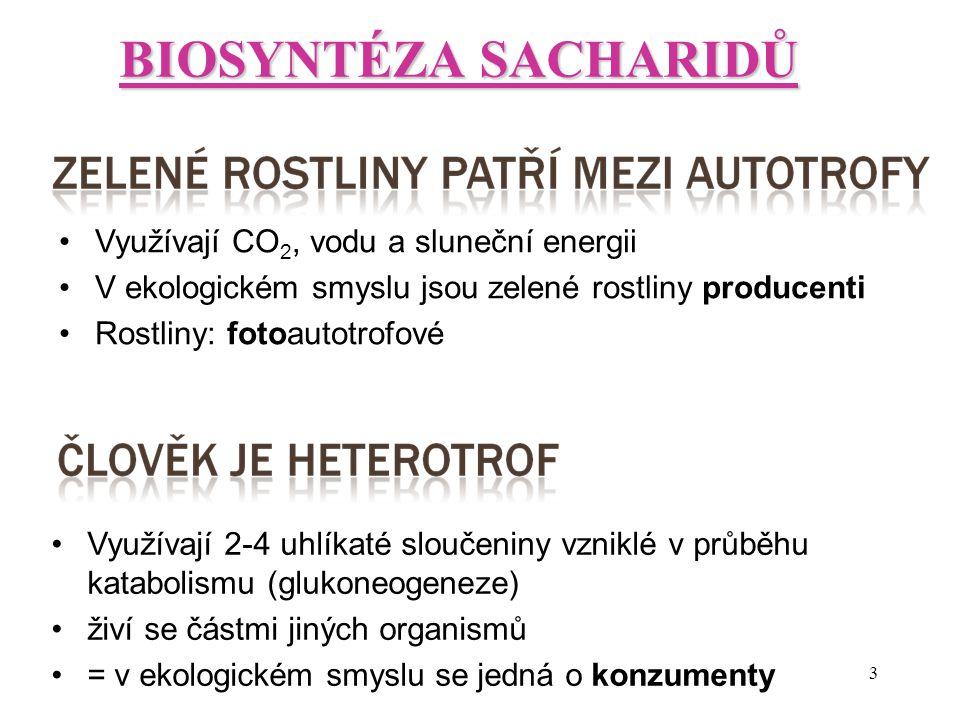 3 BIOSYNTÉZA SACHARIDŮ Využívají CO 2, vodu a sluneční energii V ekologickém smyslu jsou zelené rostliny producenti Rostliny: fotoautotrofové Využívaj