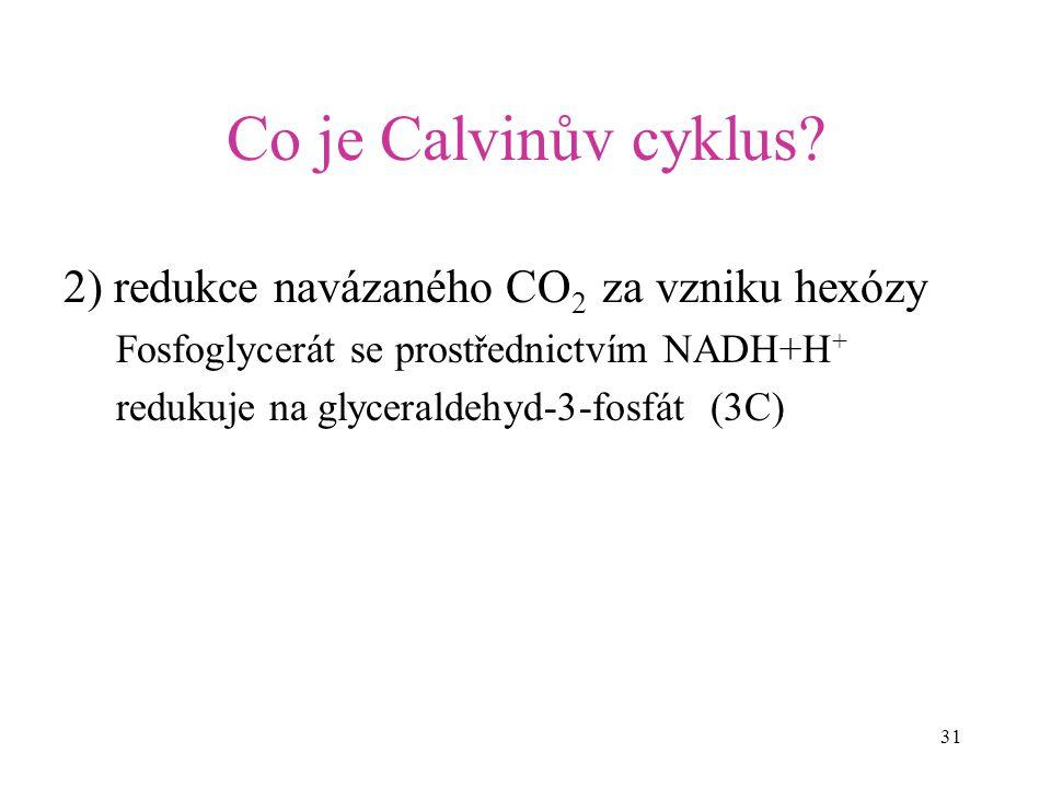 31 Co je Calvinův cyklus? 2) redukce navázaného CO 2 za vzniku hexózy Fosfoglycerát se prostřednictvím NADH+H + redukuje na glyceraldehyd-3-fosfát (3C
