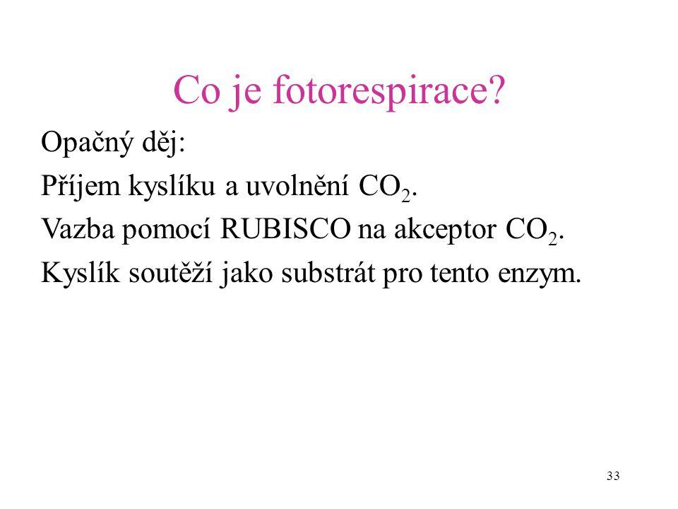 33 Co je fotorespirace? Opačný děj: Příjem kyslíku a uvolnění CO 2. Vazba pomocí RUBISCO na akceptor CO 2. Kyslík soutěží jako substrát pro tento enzy