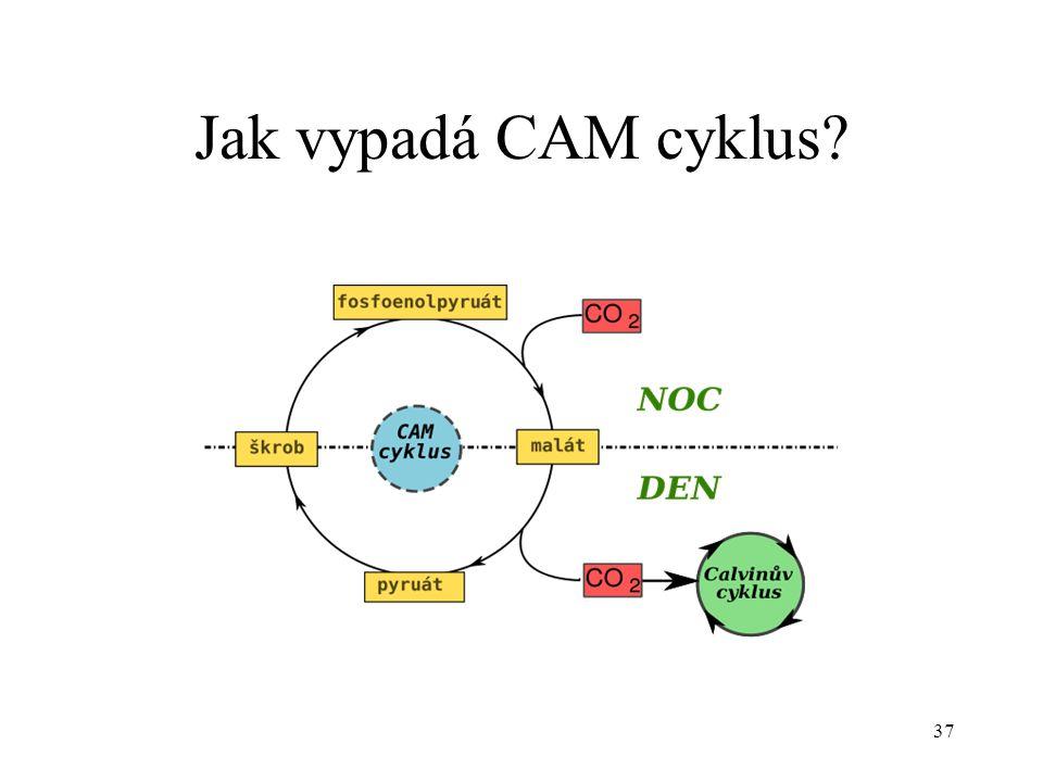 37 Jak vypadá CAM cyklus?