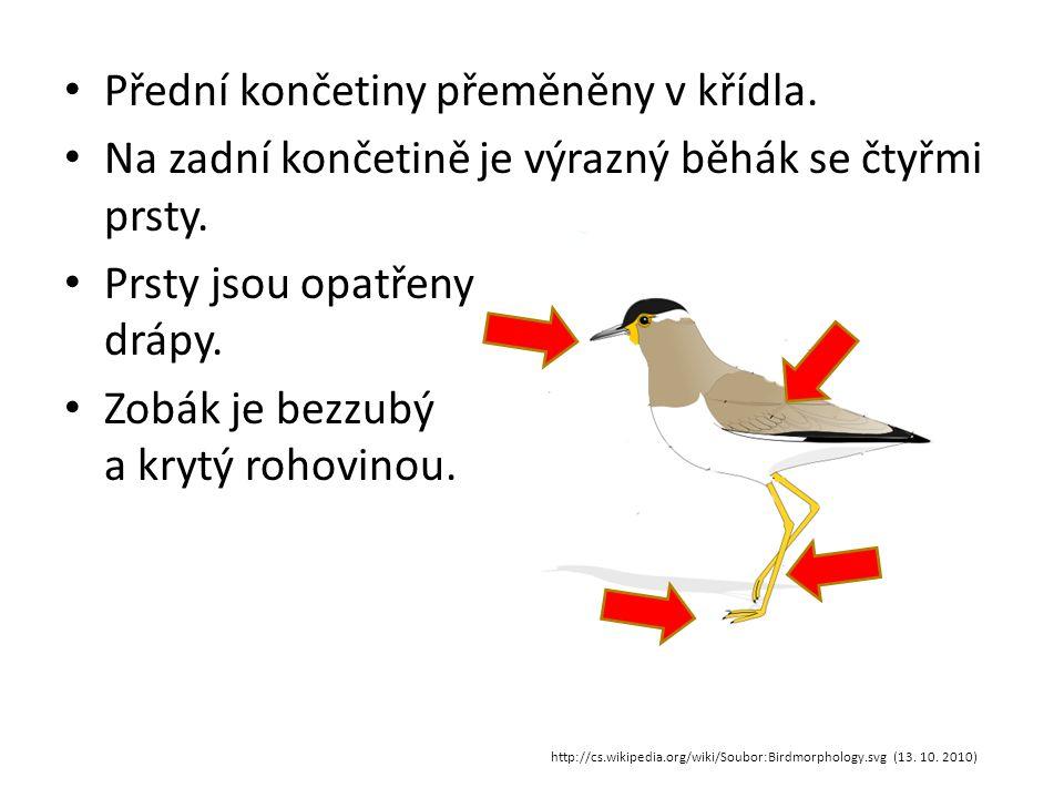 Kostra ptáků http://media.photobucket.com/image/bird%20skeleton/1zuzax1/CREATURE%20DESIGN/bird-skeleton.jpg?o=3 (13.