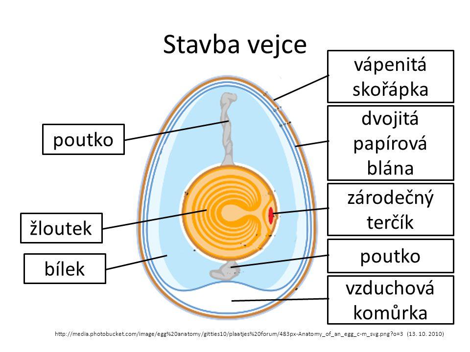 Stavba vejce http://media.photobucket.com/image/egg%20anatomy/gitties10/plaatjes%20forum/483px-Anatomy_of_an_egg_c-m_svg.png?o=3 (13. 10. 2010) bílek