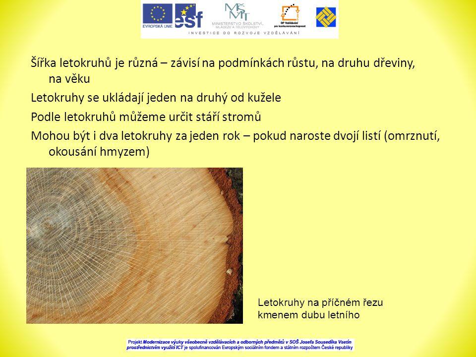 Šířka letokruhů je různá – závisí na podmínkách růstu, na druhu dřeviny, na věku Letokruhy se ukládají jeden na druhý od kužele Podle letokruhů můžeme