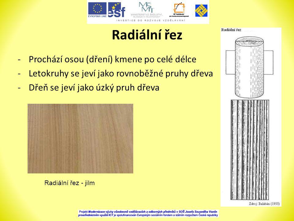 Radiální řez -Prochází osou (dření) kmene po celé délce -Letokruhy se jeví jako rovnoběžné pruhy dřeva -Dřeň se jeví jako úzký pruh dřeva Radiální řez - jilm