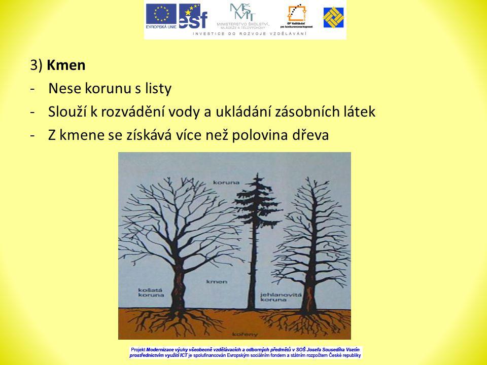 3) Kmen -Nese korunu s listy -Slouží k rozvádění vody a ukládání zásobních látek -Z kmene se získává více než polovina dřeva