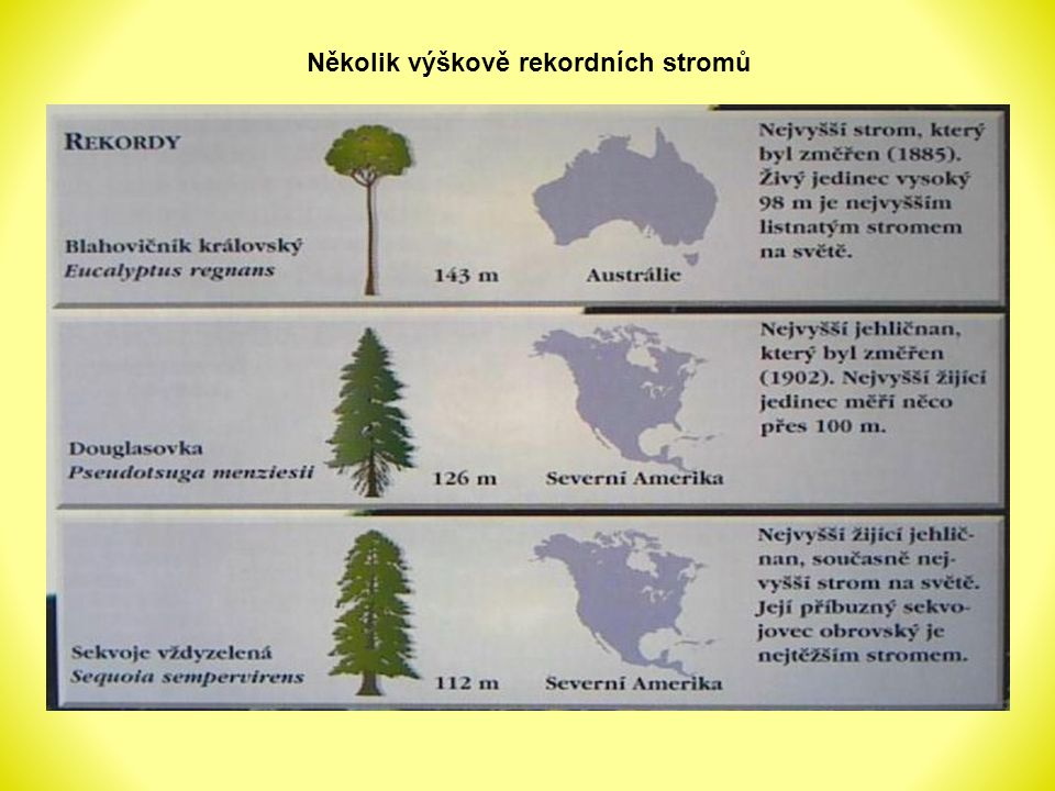 Šířka letokruhů je různá – závisí na podmínkách růstu, na druhu dřeviny, na věku Letokruhy se ukládají jeden na druhý od kužele Podle letokruhů můžeme určit stáří stromů Mohou být i dva letokruhy za jeden rok – pokud naroste dvojí listí (omrznutí, okousání hmyzem) Letokruhy na příčném řezu kmenem dubu letního