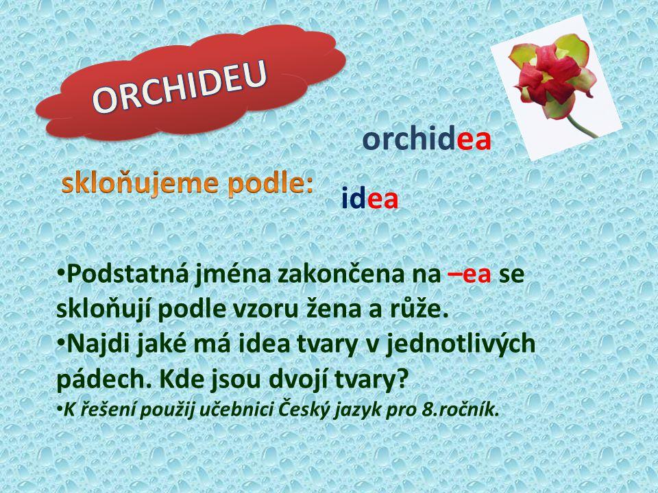 idea orchidea Podstatná jména zakončena na –ea se skloňují podle vzoru žena a růže. Najdi jaké má idea tvary v jednotlivých pádech. Kde jsou dvojí tva
