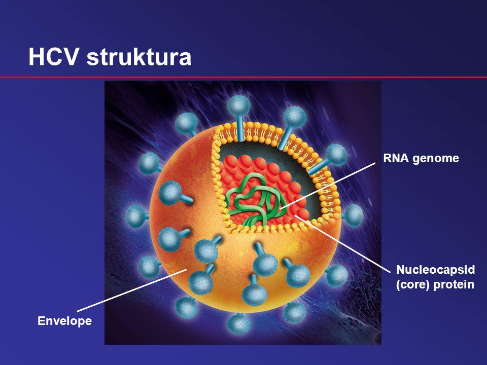 HCV struktura  RNA: délka řetězce 10 000 nukleotidů  Nucleocapsid: proteinový obal RNA (ochrana)  Obal: lipidy + proteiny (E1 a E2)