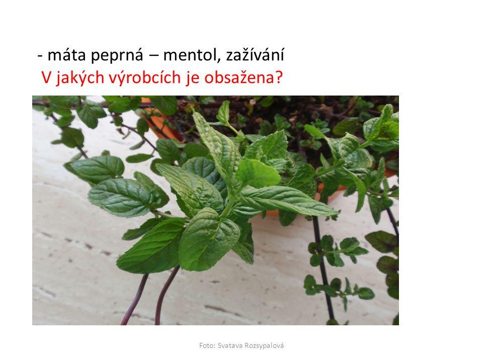 Foto: Svatava Rozsypalová - máta peprná – mentol, zažívání V jakých výrobcích je obsažena?