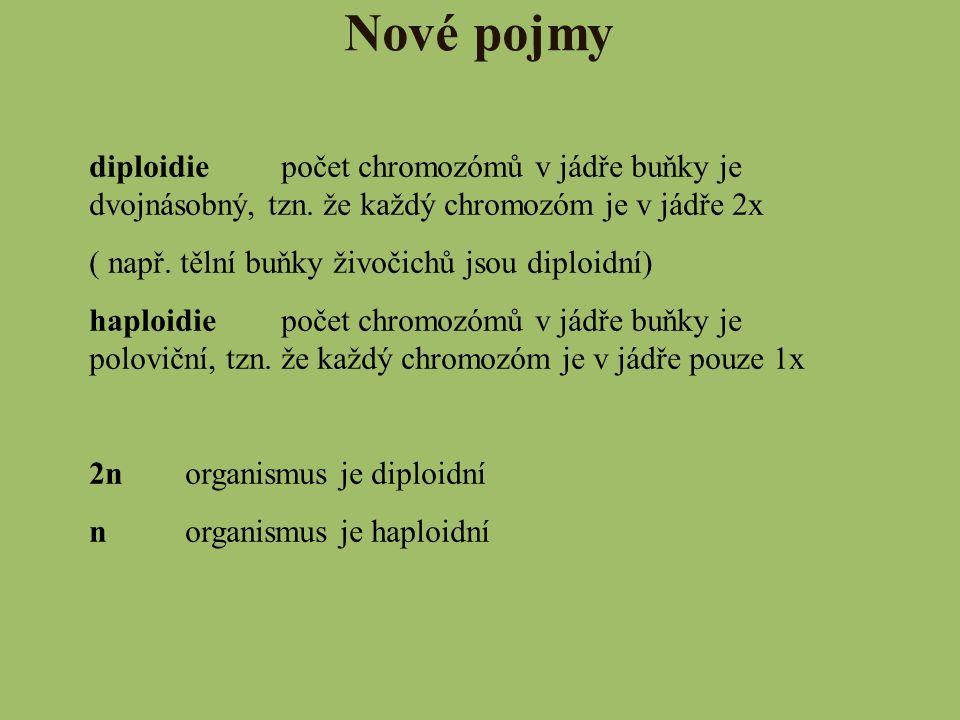 Nové pojmy diploidiepočet chromozómů v jádře buňky je dvojnásobný, tzn. že každý chromozóm je v jádře 2x ( např. tělní buňky živočichů jsou diploidní)