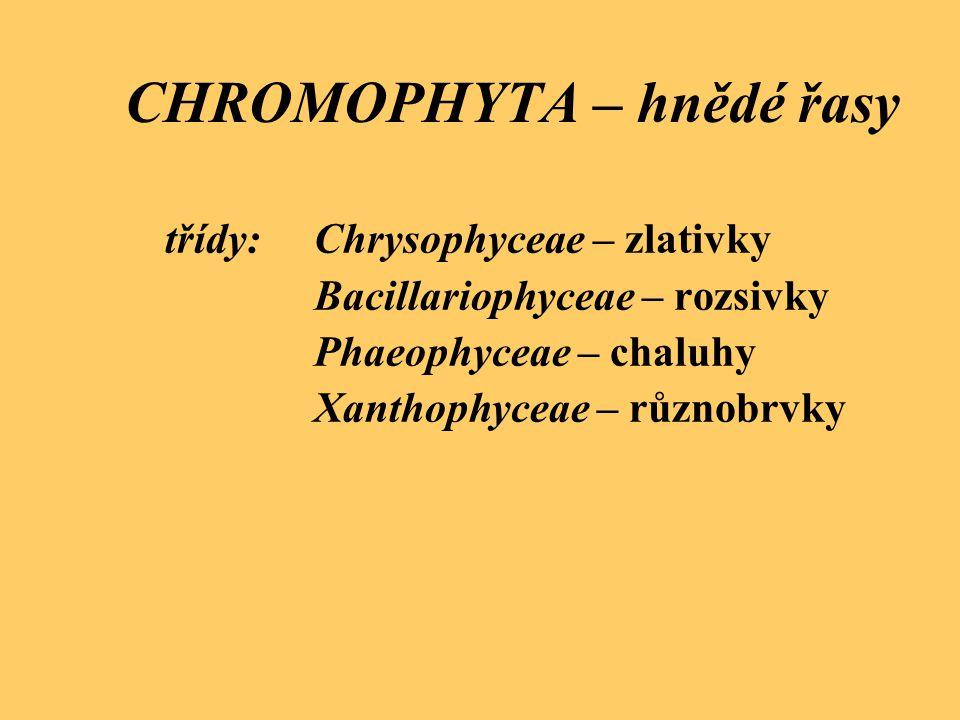CHROMOPHYTA – hnědé řasy třídy:Chrysophyceae – zlativky Bacillariophyceae – rozsivky Phaeophyceae – chaluhy Xanthophyceae – různobrvky