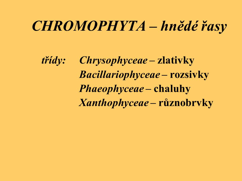 Chrysophyceae - zlativky