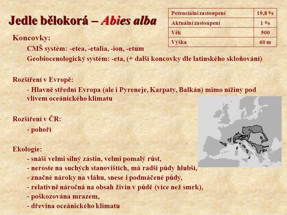 Jedle bělokorá – Abies alba Koncovky: CMŠ systém: -etea, -etalia, -ion, -etum Geobiocenologický systém: -eta, (+ další koncovky dle latinského skloňov