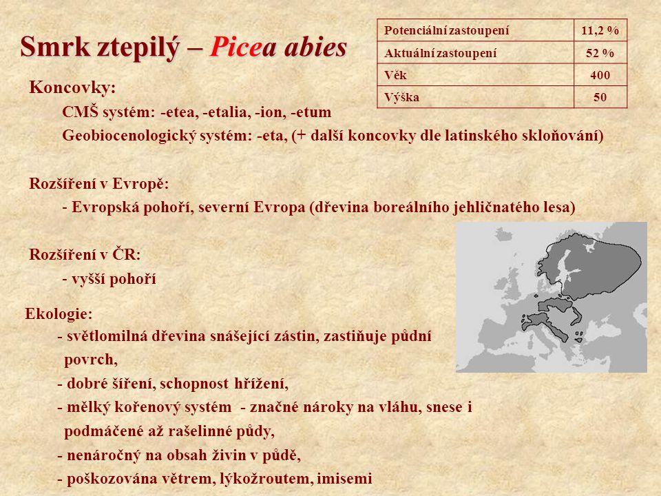Smrk ztepilý – Picea abies Koncovky: CMŠ systém: -etea, -etalia, -ion, -etum Geobiocenologický systém: -eta, (+ další koncovky dle latinského skloňová
