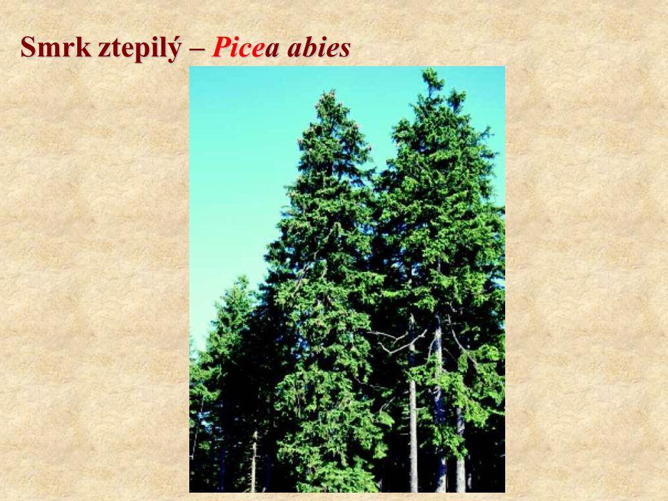 Borovice kleč – Pinus mugo Koncovky: CMŠ systém: -etea, -etalia, -ion, -etum Geobiocenologický systém: -eta, (+ další koncovky dle latinského skloňování) Rozšíření v Evropě: - středoevropský endemit Rozšíření v ČR: - nejvyšší pohoří, rašeliniště Ekologie: - silně světlomilná, - snáší suchá i velmi vlhká stanoviště, - lhostejnost ke geologickému podkladu, - vysoká odolnost ke klimatu Potenciální zastoupeníDo 0,3 % Aktuální zastoupeníDo 0,2 % VěkStovky let Výška4 m