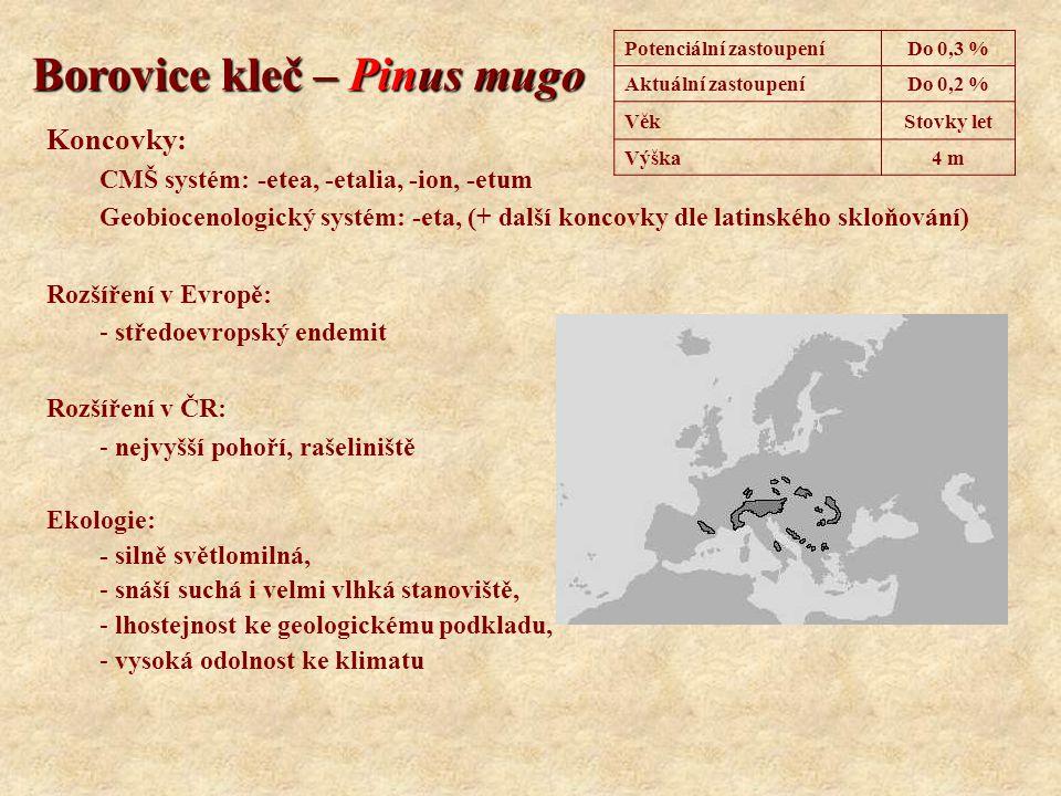 Borovice kleč – Pinus mugo Koncovky: CMŠ systém: -etea, -etalia, -ion, -etum Geobiocenologický systém: -eta, (+ další koncovky dle latinského skloňová