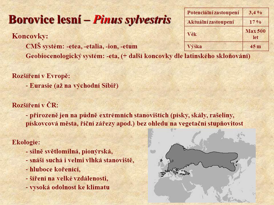 Borovice lesní – Pinus sylvestris Koncovky: CMŠ systém: -etea, -etalia, -ion, -etum Geobiocenologický systém: -eta, (+ další koncovky dle latinského s