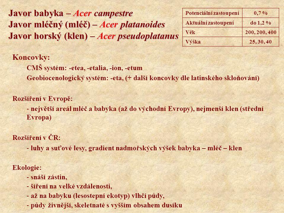 Lípa malolistá (srdčitá) – Tilia cordata Lípa velkolistá – Tilia platyphyllos Koncovky: CMŠ systém: -etea, -etalia, -ion, -etum Geobiocenologický systém: -eta, (+ další koncovky dle latinského skloňování) Rozšíření v Evropě: - lípa srdčitá Eurasie, lípa velkolistá Evropa Rozšíření v ČR: - luhy a suťové lesy Ekologie: - snáší zástin, velmi silně zastiňují půdu, - vlhčí půdy, - půdy živnější, skeletnaté s vyšším obsahem dusíku, na hloubce půdy nezáleží, - lípa velkolistá i na lesostepích Potenciální zastoupení0,8 % Aktuální zastoupenído 1,1 % Věk400, 1000 Výška30