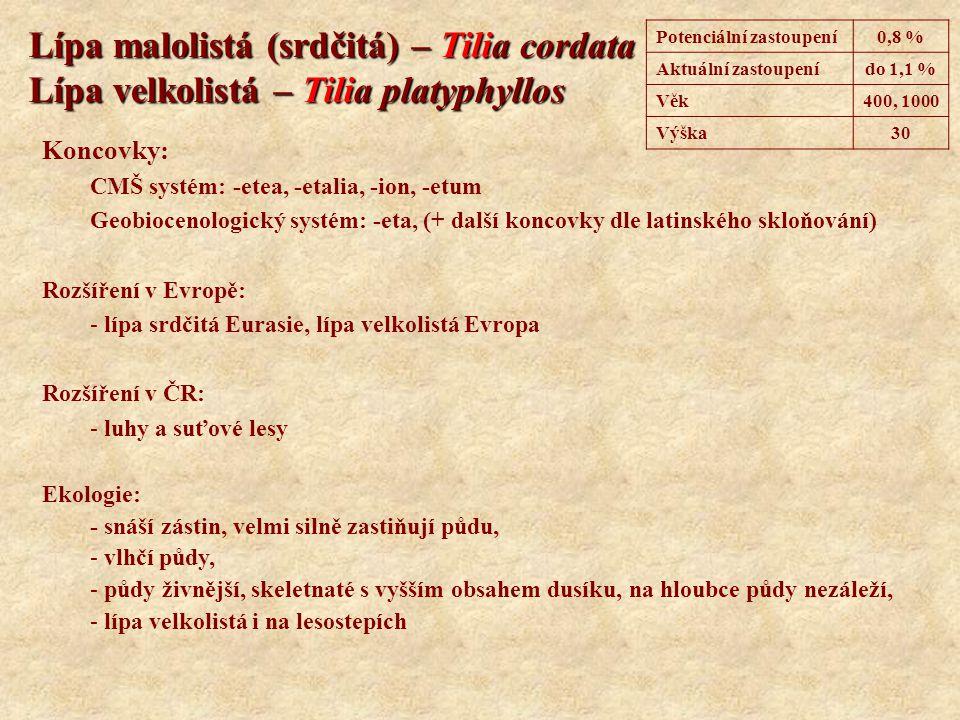 Lípa malolistá (srdčitá) – Tilia cordata Lípa velkolistá – Tilia platyphyllos Koncovky: CMŠ systém: -etea, -etalia, -ion, -etum Geobiocenologický syst