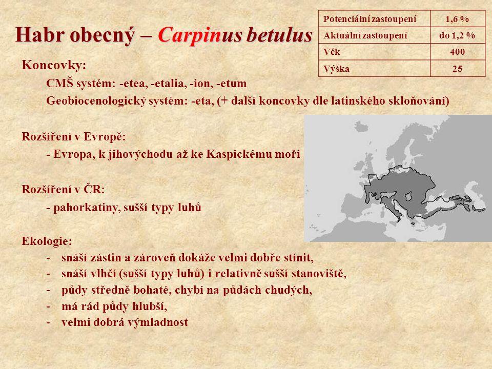 Habr obecný – Carpinus betulus Koncovky: CMŠ systém: -etea, -etalia, -ion, -etum Geobiocenologický systém: -eta, (+ další koncovky dle latinského sklo