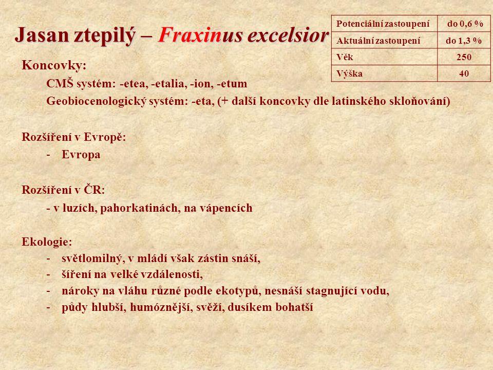 Jasan ztepilý – Fraxinus excelsior Koncovky: CMŠ systém: -etea, -etalia, -ion, -etum Geobiocenologický systém: -eta, (+ další koncovky dle latinského