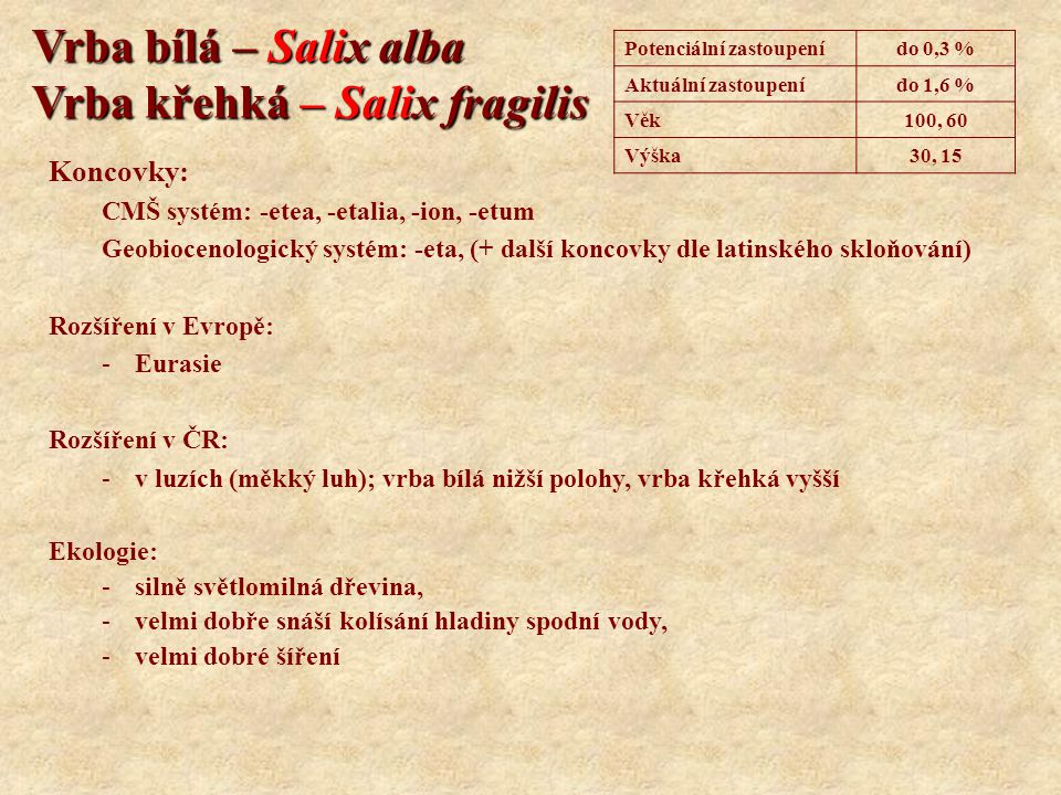 Vrba bílá – Salix alba Vrba křehká – Salix fragilis Koncovky: CMŠ systém: -etea, -etalia, -ion, -etum Geobiocenologický systém: -eta, (+ další koncovk