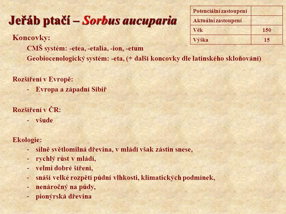 Bříza bělokorá – Betula pendula Koncovky: CMŠ systém: -etea, -etalia, -ion, -etum Geobiocenologický systém: -eta, (+ další koncovky dle latinského skloňování) Rozšíření v Evropě: -Euroasijský druh Rozšíření v ČR: -všude Ekologie: -silně světlomilná dřevina, v mládí však zástin snese, -velmi dobré šíření, -snáší extrémní stanoviště, -pionýrská dřevina Potenciální zastoupení0,8 % Aktuální zastoupení2,8 % Věk150 Výška30