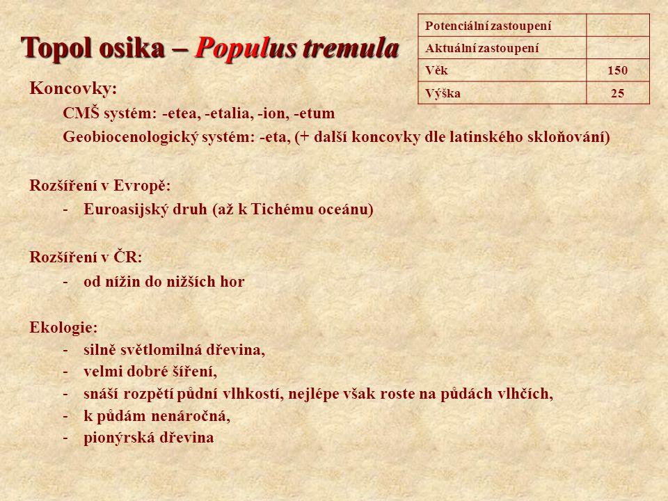 Topol osika – Populus tremula Koncovky: CMŠ systém: -etea, -etalia, -ion, -etum Geobiocenologický systém: -eta, (+ další koncovky dle latinského skloň