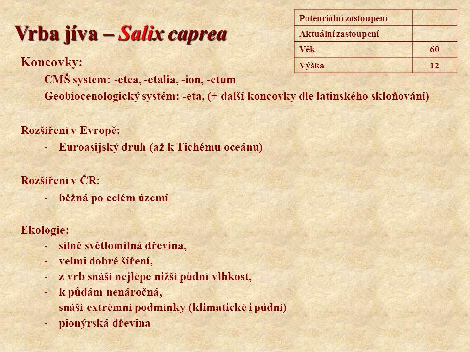 Vrba jíva – Salix caprea Potenciální zastoupení Aktuální zastoupení Věk60 Výška12 Koncovky: CMŠ systém: -etea, -etalia, -ion, -etum Geobiocenologický