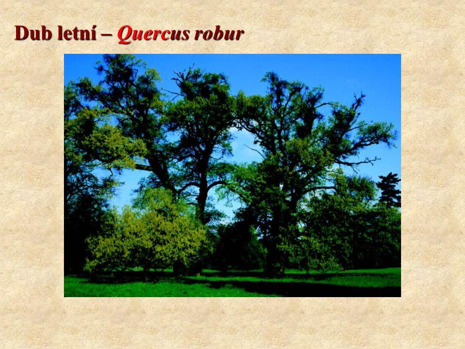 Dub zimní – Quercus petraea Koncovky: CMŠ systém: -etea, -etalia, -ion, -etum Geobiocenologický systém: -eta, (+ další koncovky dle latinského skloňování) Rozšíření v Evropě: - Evropa.