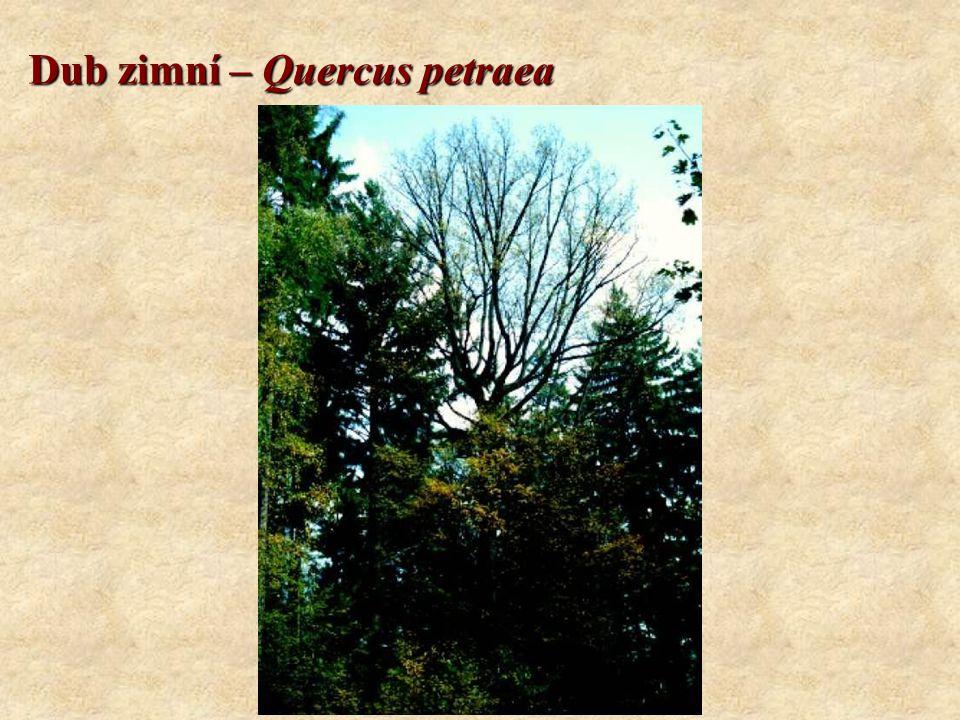 Buk lesní – Fagus sylvatica Koncovky: CMŠ systém: -etea, -etalia, -ion, -etum Geobiocenologický systém: -eta, (+ další koncovky dle latinského skloňování) Rozšíření v Evropě: - Evropa.