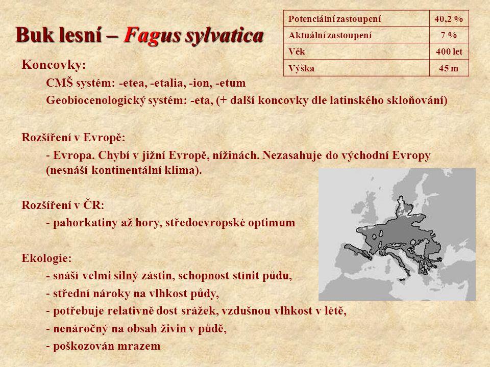 Buk lesní – Fagus sylvatica Koncovky: CMŠ systém: -etea, -etalia, -ion, -etum Geobiocenologický systém: -eta, (+ další koncovky dle latinského skloňov