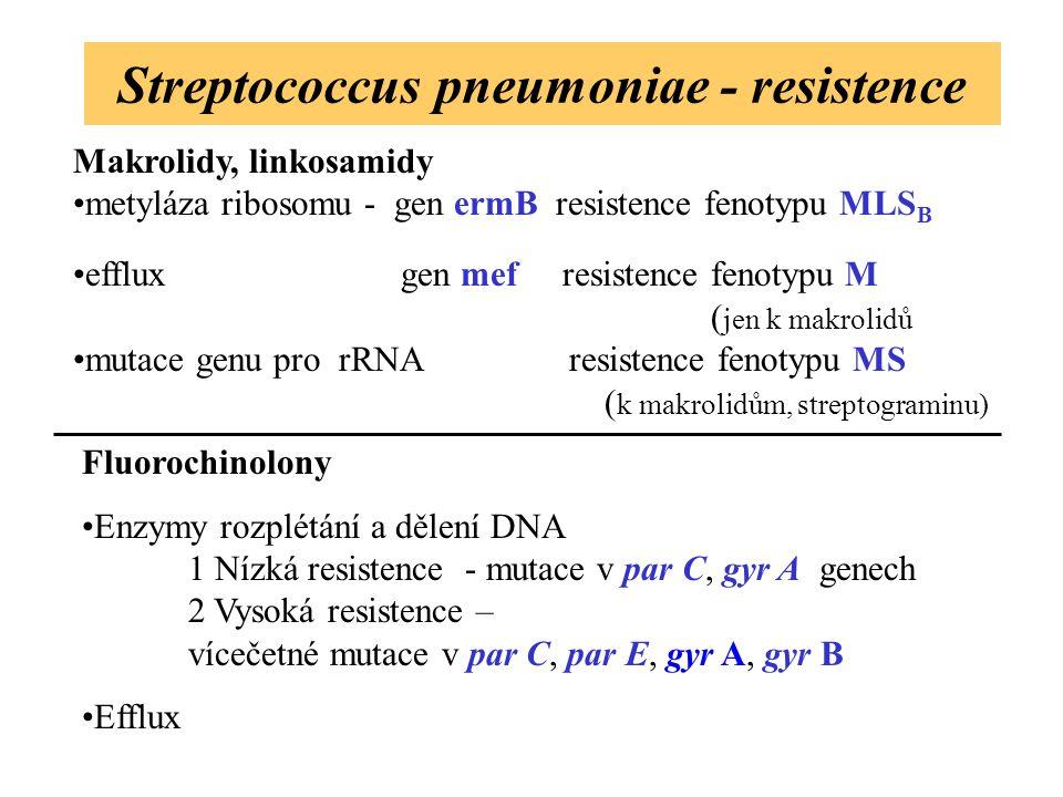 Streptococcus pneumoniae - resistence Makrolidy, linkosamidy metyláza ribosomu - gen ermB resistence fenotypu MLS B efflux gen mef resistence fenotypu