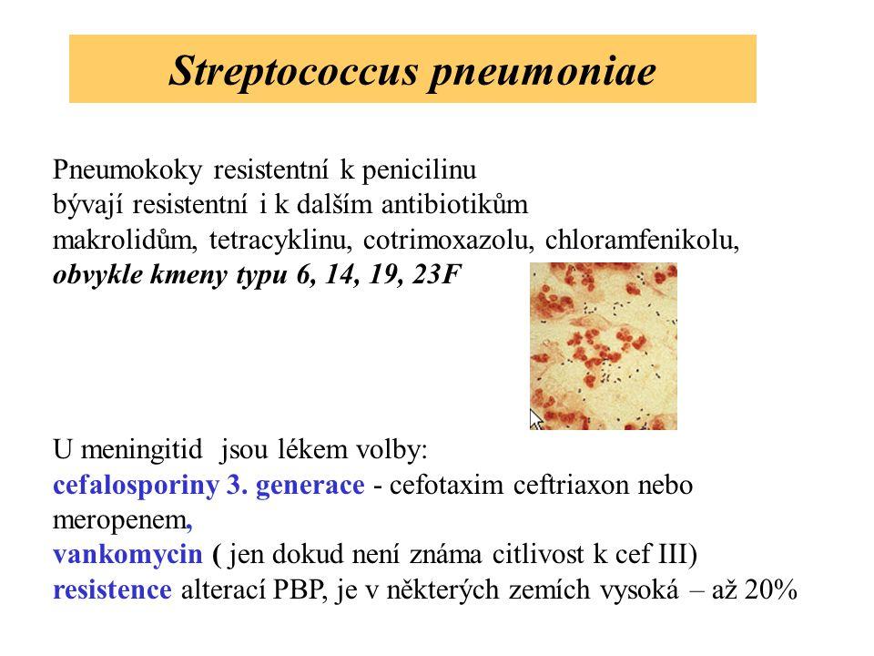 Streptococcus pneumoniae Pneumokoky resistentní k penicilinu bývají resistentní i k dalším antibiotikům makrolidům, tetracyklinu, cotrimoxazolu, chlor