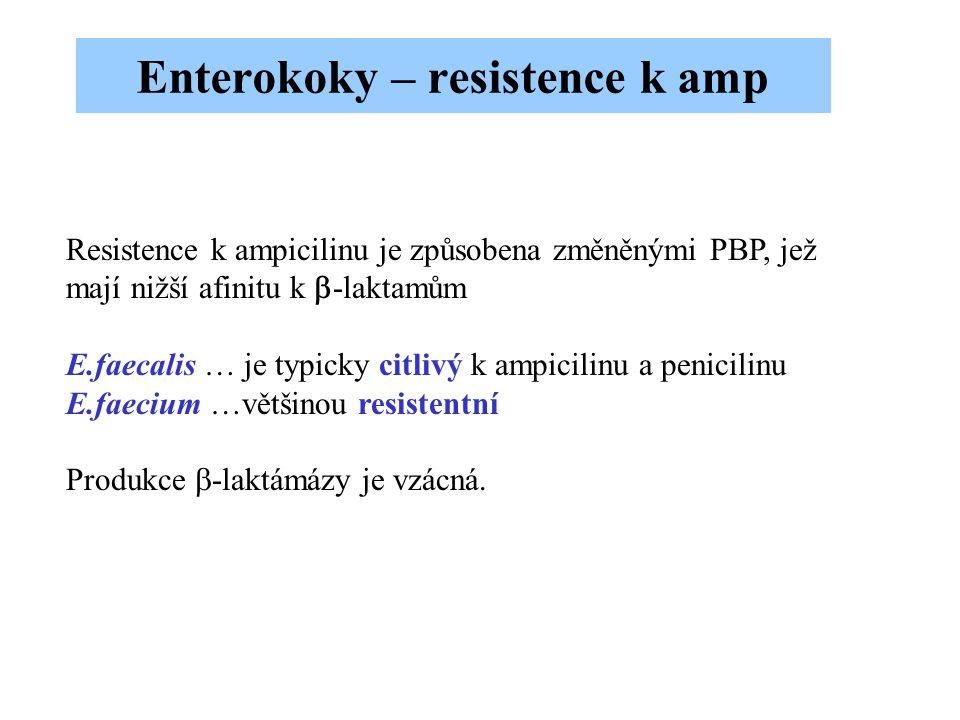 Resistence k ampicilinu je způsobena změněnými PBP, jež mají nižší afinitu k  -laktamům E.faecalis … je typicky citlivý k ampicilinu a penicilinu E.f