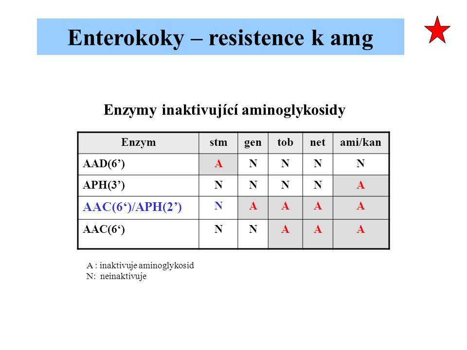 Enzymstmgentobnetami/kan AAD(6')ANNNN APH(3')NNNNA AAC(6')/APH(2') NAAAA AAC(6')NNAAA A : inaktivuje aminoglykosid N: neinaktivuje Enzymy inaktivující