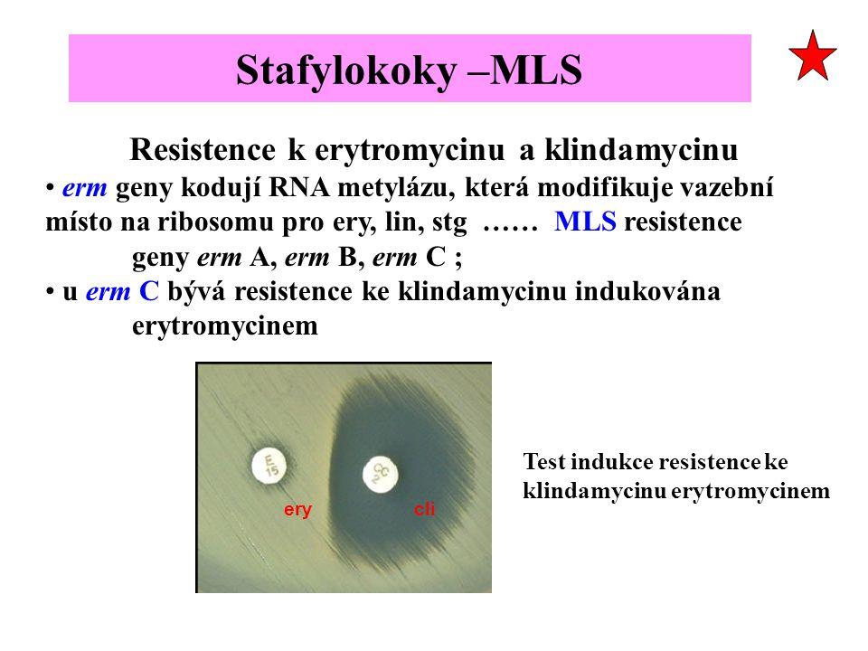 Resistence k erytromycinu a klindamycinu erm geny kodují RNA metylázu, která modifikuje vazební místo na ribosomu pro ery, lin, stg …… MLS resistence