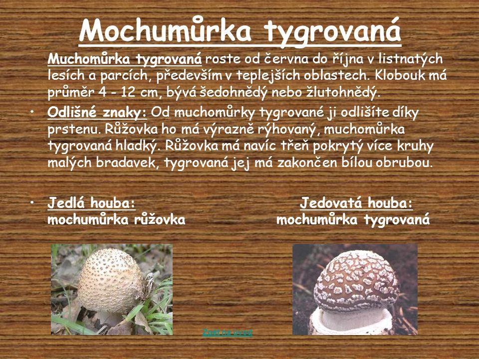 Mochumůrka tygrovaná Muchomůrka tygrovaná roste od června do října v listnatých lesích a parcích, především v teplejších oblastech. Klobouk má průměr