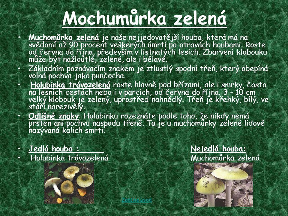 Mochumůrka zelená Muchomůrka zelená je naše nejjedovatější houba, která má na svědomí až 90 procent veškerých úmrtí po otravách houbami. Roste od červ