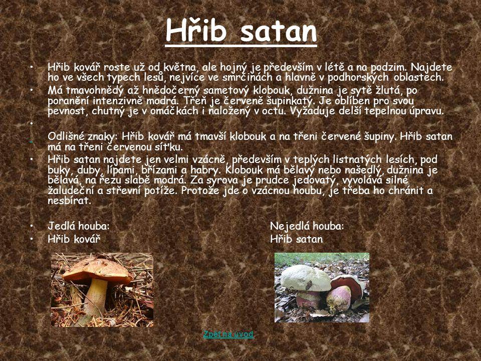 Hřib satan Hřib kovář roste už od května, ale hojný je především v létě a na podzim. Najdete ho ve všech typech lesů, nejvíce ve smrčinách a hlavně v