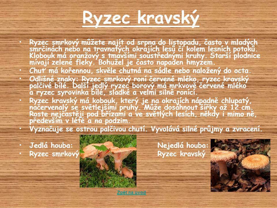 Ryzec kravský Ryzec smrkový můžete najít od srpna do listopadu, často v mladých smrčinách nebo na travnatých okrajích lesů či kolem lesních potoků. Kl