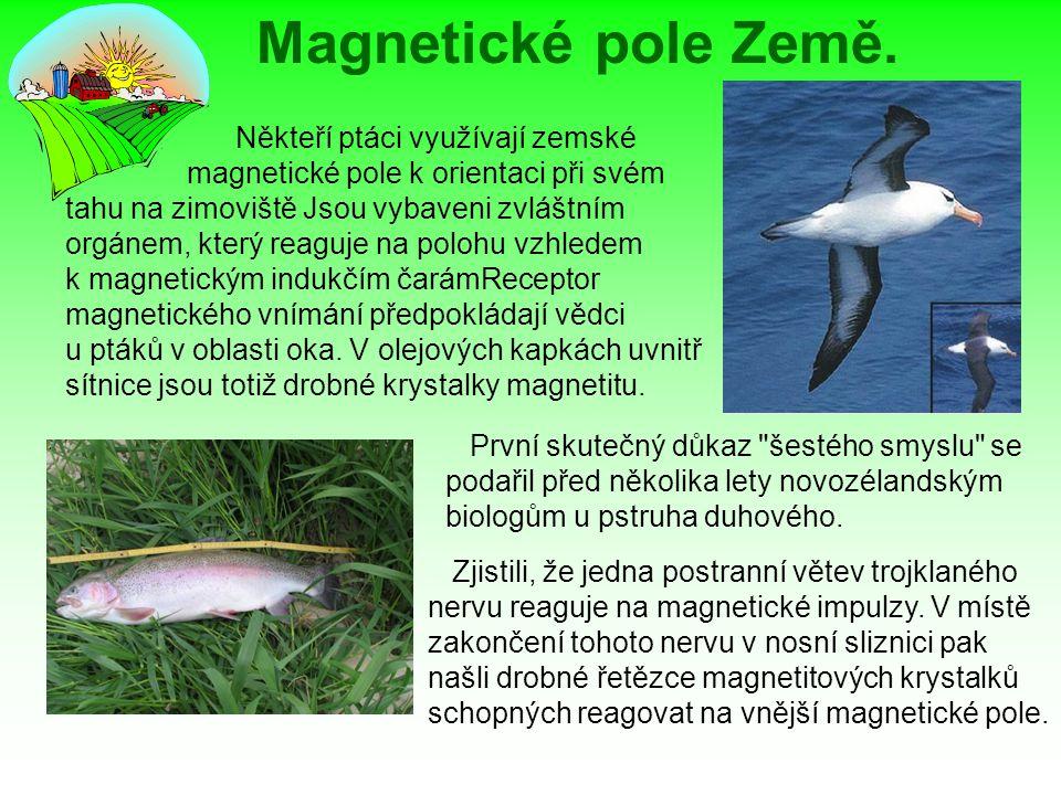 Magnetické pole Země. Někteří ptáci využívají zemské magnetické pole k orientaci při svém tahu na zimoviště Jsou vybaveni zvláštním orgánem, který rea
