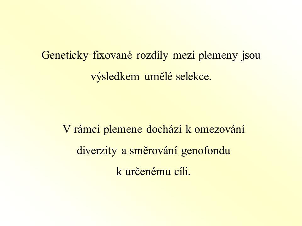 Geneticky fixované rozdíly mezi plemeny jsou výsledkem umělé selekce.